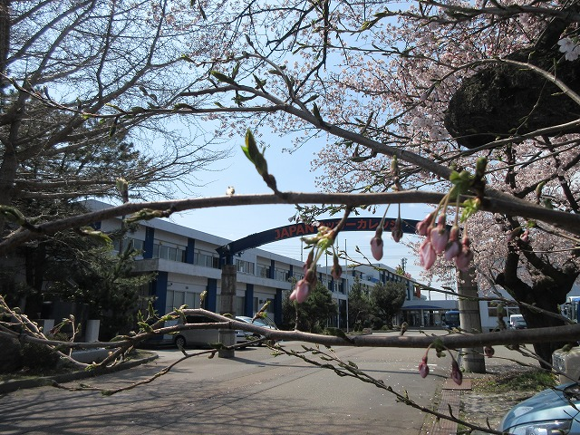 桜の写真2020 (7)