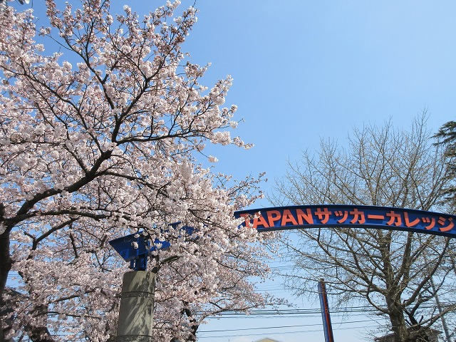 桜の写真2020 (3)