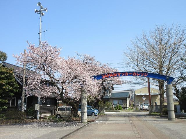 桜の写真2020 (1)