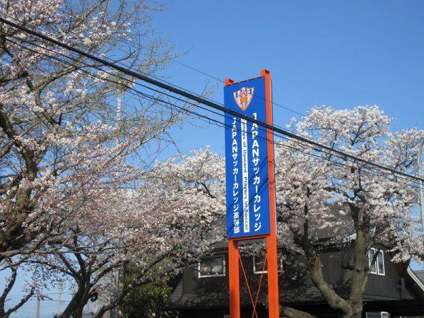 桜2021 (4)